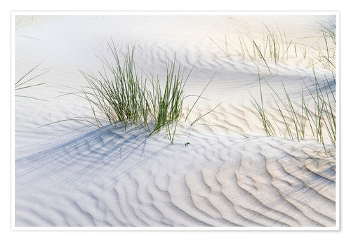 Premium poster Dunegrasses in the sand