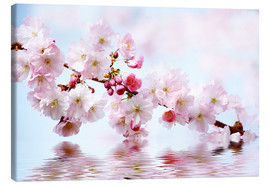 Canvas  Cherry Blossoms - Renate Knapp Waldundwiesenfee