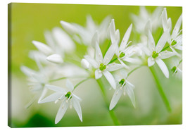 Canvas print  Ramsons - Renate Knapp
