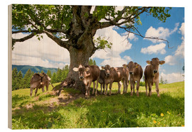 Wood print  Young Cows - Jan Schuler