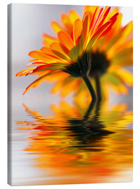 Canvas print  Gerbera water melody - Renate Knapp