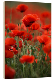 Wood print  Poppy Meadow - Nailia Schwarz