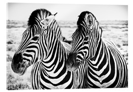 Acrylic print  Two Zebras - Jan Schuler