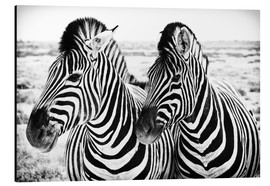 Aluminium print  Two Zebras - Jan Schuler