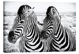 Canvas print  Two Zebras - Jan Schuler