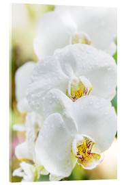 Acrylic glass  White Orchid - Suzka