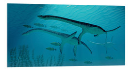 Foam board print  Three Plesiosaurus dinosaurs migrate with a school of fish. - Corey Ford