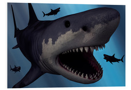 Foam board print  A Megalodon shark from the Cenozoic Era - Mark Stevenson