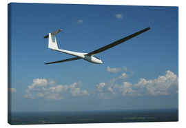 Canvas print  Glider over the sea - Daniel Karlsson