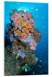 Acrylic print  Colourful reef scene - Mathieu Meur