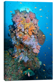 Canvas print  Colourful reef scene - Mathieu Meur