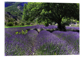 Foam board print  Lavender field with tree - Jürgen Feuerer