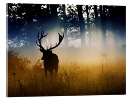 Acrylic glass  A red deer in the woods - Alex Saberi