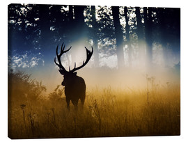 Canvas print  Red deer in the subtle light - Alex Saberi