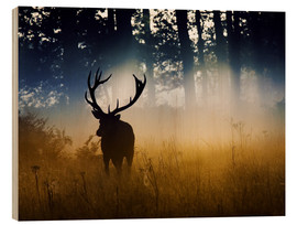 Wood print  Red deer in the subtle light - Alex Saberi