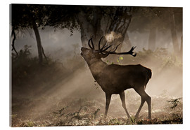 Acrylic print  Deer in the forest - Alex Saberi