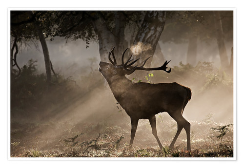 Premium poster Deer in the forest