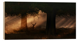 Wood  The silhouette of a Roth Irschs, Cervus elaphus, in the morning in the autumn mist - Alex Saberi