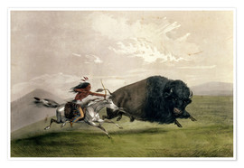Premium poster  The Buffalo Chase 'Singling Out' - George Catlin
