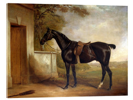 Acrylic glass  Portrait of Buckle, First Lord Chesham's Hunter, 1836 - John E. Ferneley