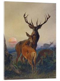 Acrylic print  A Stag with Deer at Sunset - Charles Jones