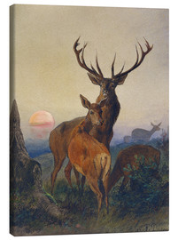 Canvas print  A Stag with Deer at Sunset - Charles Jones