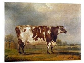 Acrylic print  Wildair, an 8-year-old cow in a river landscape, 1827 - Thomas Weaver