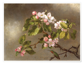 Premium poster  Apple Blossoms and a Hummingbird - Martin Johnson Heade