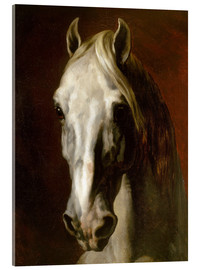 Acrylic print  Head of a white horse - Theodore Gericault