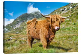 Canvas print  Scottish Highland Cattle - Olaf Protze