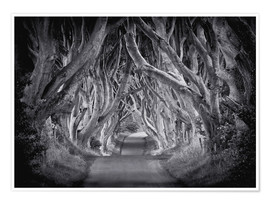 Premium poster  The Dark Hedges - Carsten Meyerdierks
