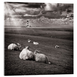 Acrylic print  Talking Sheep - Carsten Meyerdierks