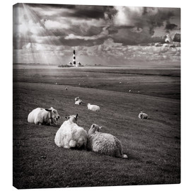 Canvas print  Talking Sheep - Carsten Meyerdierks