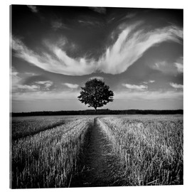 Acrylic print  Tree and clouds - Carsten Meyerdierks