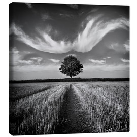 Canvas print  Tree and clouds - Carsten Meyerdierks