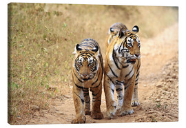 Canvas  Royal Bengal Tigers on the track - Jagdeep Rajput