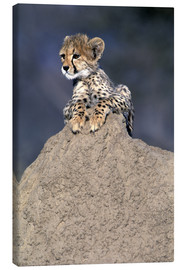 Canvas print  Cheetah baby on a stone - Theo Allofs