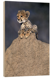 Wood  A baby cheetah - Theo Allofs