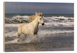 Wood print  Camargue horse in the surf - Adam Jones