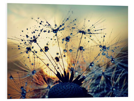 Foam board print  Dandelion in the sunset - Julia Delgado