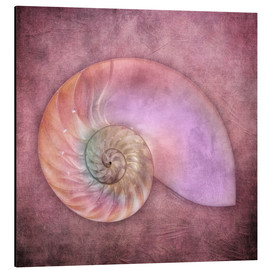 Aluminium print  Sea shell - INA FineArt