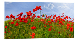 Acrylic print  Poppies Panoramic - Melanie Viola