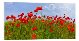 Foam board print  Poppies Panoramic - Melanie Viola