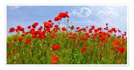Premium poster  Poppies Panoramic - Melanie Viola
