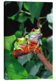 Canvas print  Redeyedtreefrogcouple sitting on a branch - David Northcott