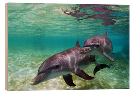 Wood print  Two bottlenose dolphins from the beaches of the Caribbean - Stuart Westmorland