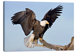 Canvas print  Eagle with outstretched wings - Charles Sleicher