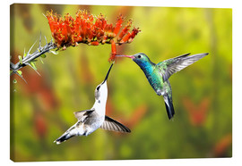 Canvas  Broad-billed Hummingbirds at a Flower - Don Grall
