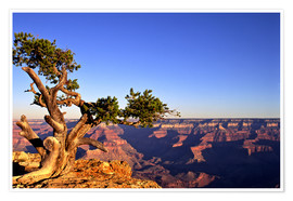 Premium poster  Grand Canyon in Arizona - Paul Thompson