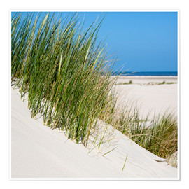 Premium poster Dunes with grass at the coastline of the german island Norderney (Germany)